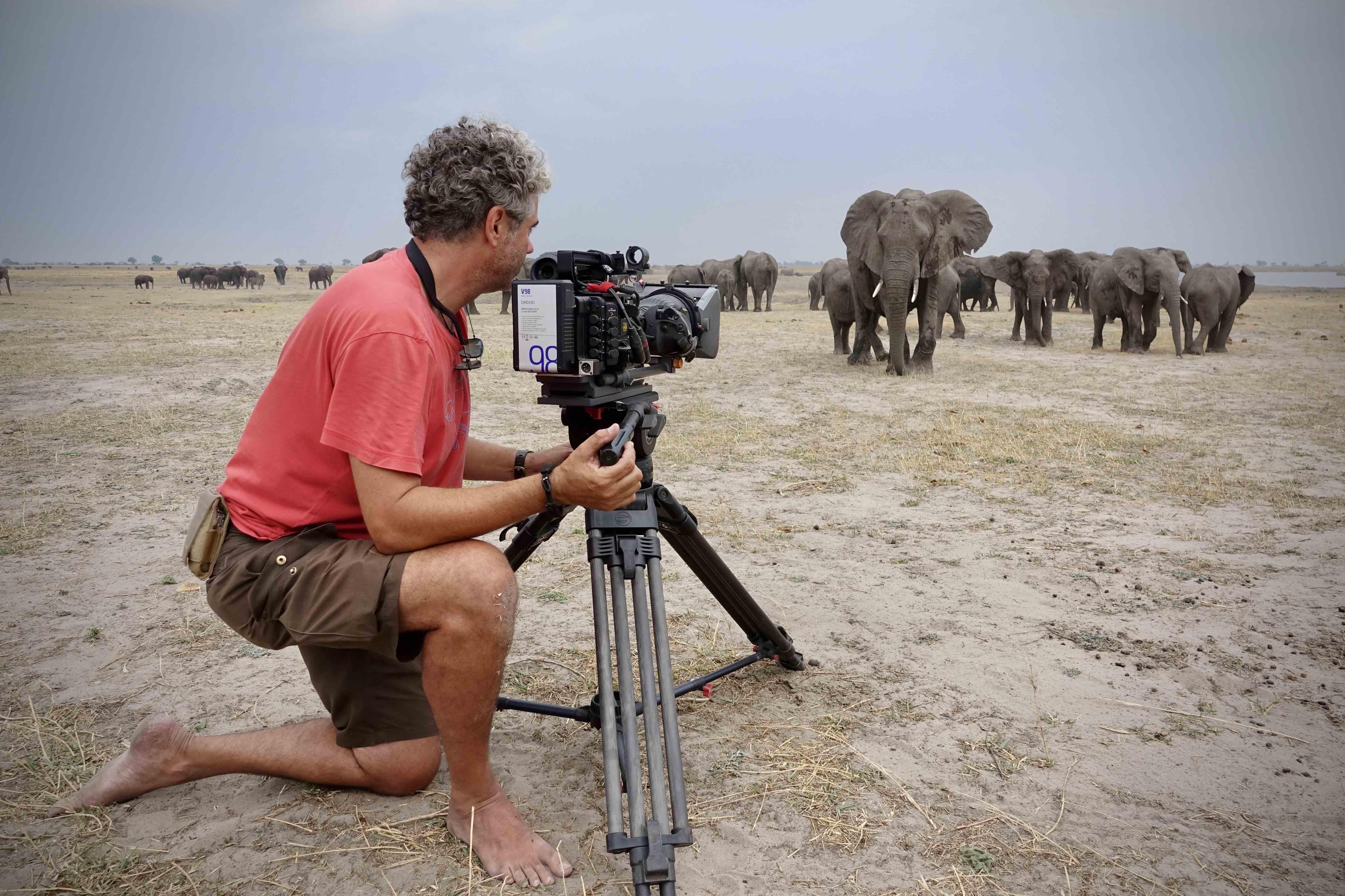 Ein Jahr unter Elefanten